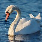 No Ugly Duckling by Owed To Nature