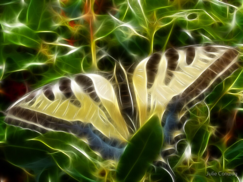 Butterfly (Fractalius) by Julie Conway