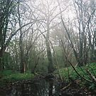 Swampy Area by KarmaSparks