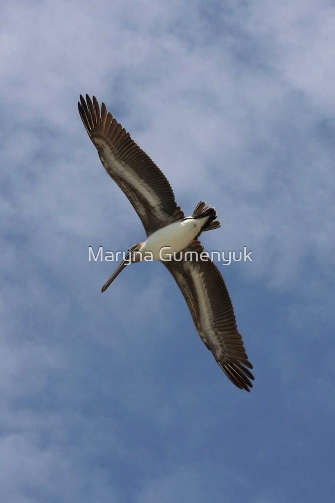 Pelican by Maryna Gumenyuk