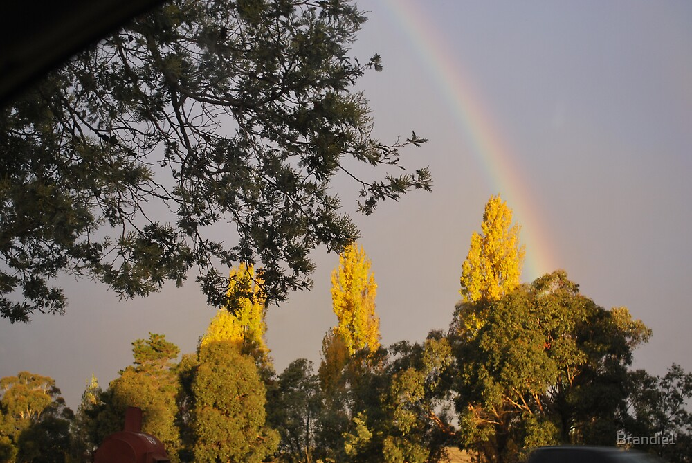 Rainbow over the tree tops by Brandie1