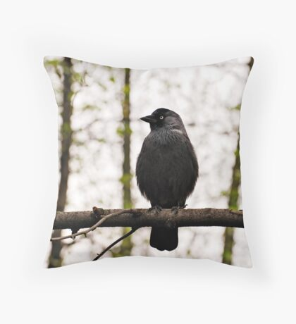 Jackdaw on the branch Throw Pillow