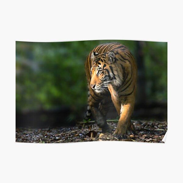 Jungle Walker Poster