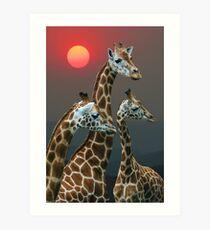 SUNSET WITH GIRAFFES 3 Art Print