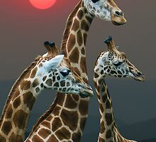 SUNSET WITH GIRAFFES 3 by Michael Sheridan