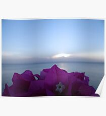 Bougainvillea By The Sea - Kenya Africa Poster