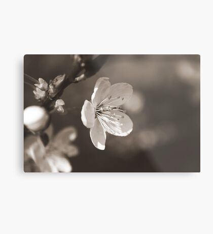 The bloom of another day Metal Print