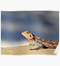 Lizard in Grey - Kenya Africa Poster