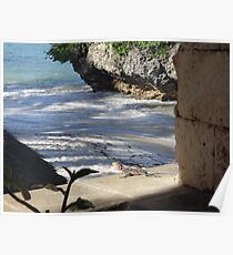 Lizard by the Seaside - Kenya Africa Poster