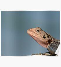 Lizard in Blue - Kenya Africa Poster