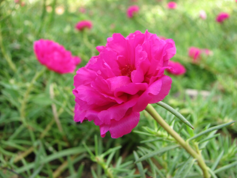 pink flower by guimart