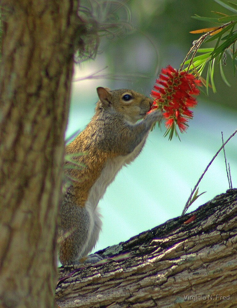 Stop and Smell the Flowers by Virginia N. Fred