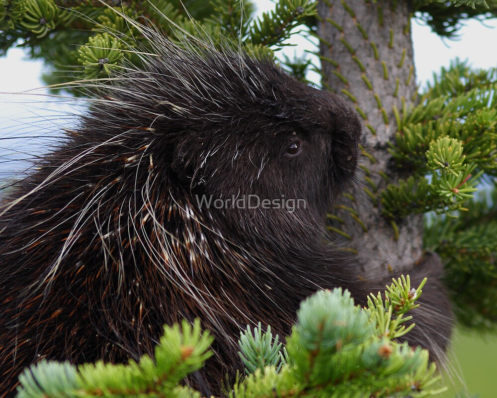 Porcupine Hug by WorldDesign