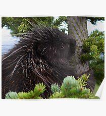 Porcupine Hug Poster