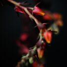 Succulent Flower 3 by wellman
