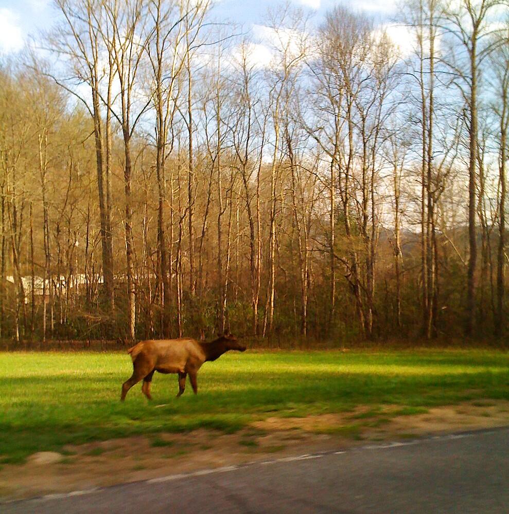 Elk Crossing by BigcityBrooke