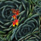 succulent bloom by wellman