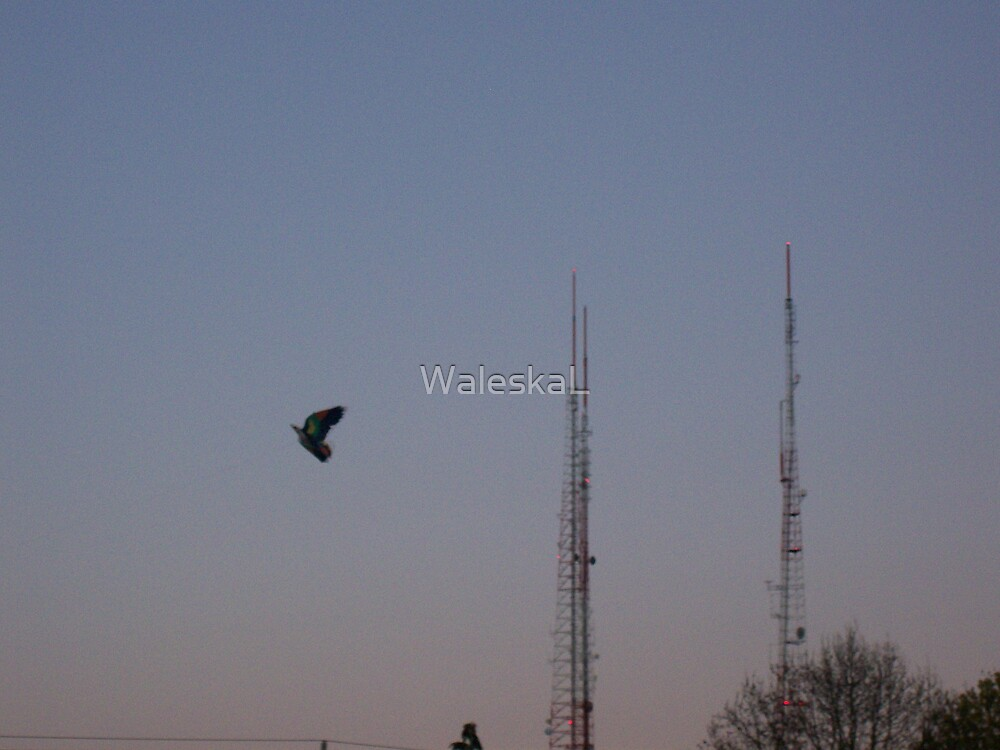 Kite by WaleskaL