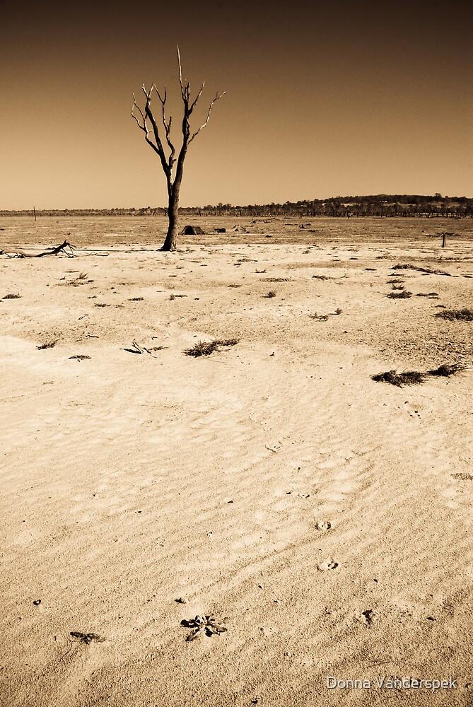 Lone tracks by Donna Vanderspek