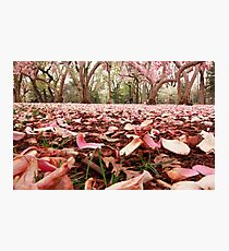 A Study In Pink Photographic Print