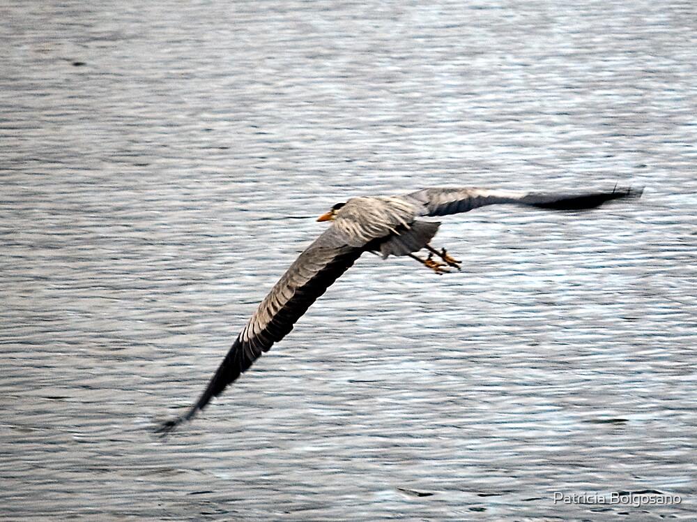 Freedom at the lake by Patricia Bolgosano