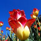 It's A Tulip Sky by Rick Lawler