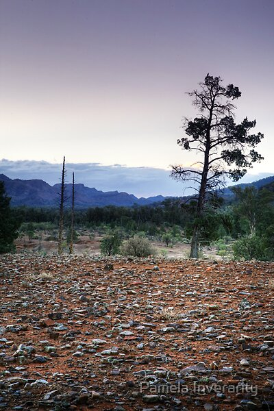 Native Pine by Pamela Inverarity