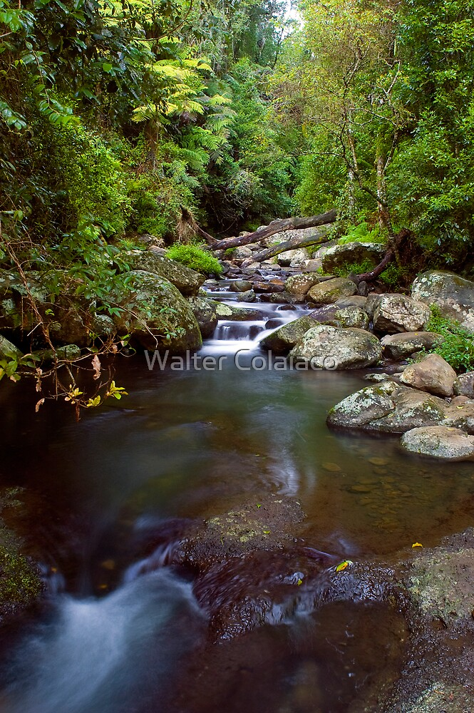 Creek Crossing by Walter Colaiaco