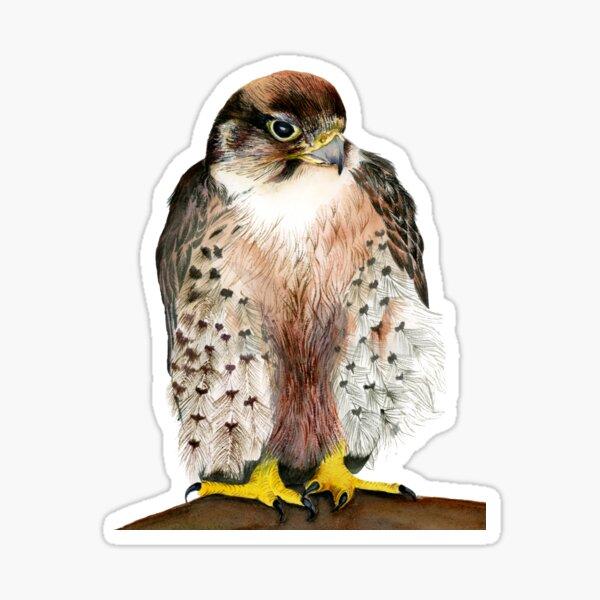 Lanner Falcon Bird Watercolor Painting Artwork Sticker