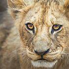 Lion Cub by Neville Jones