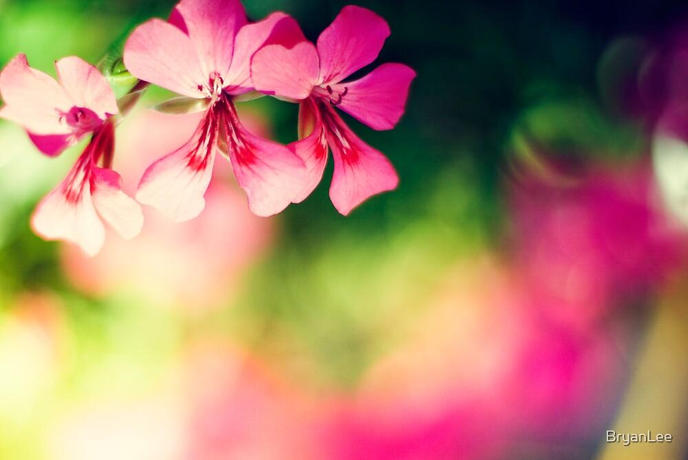 Pink triplet by BryanLee