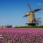 Typical Dutch.... by Adri  Padmos