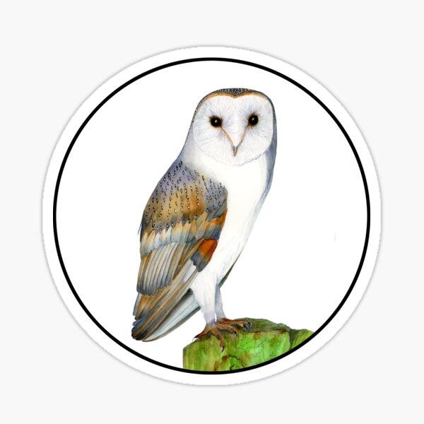 Barn Owl Bird Watercolor Painting Wildlife Artwork Sticker