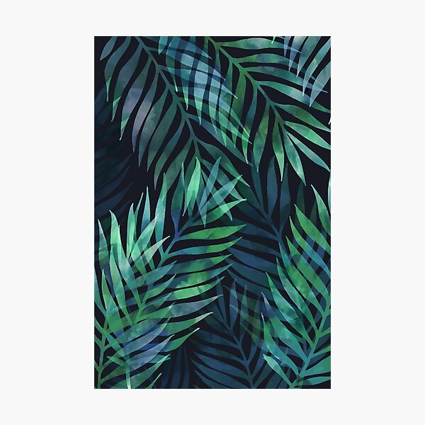 Dark green palms leaves pattern Photographic Print