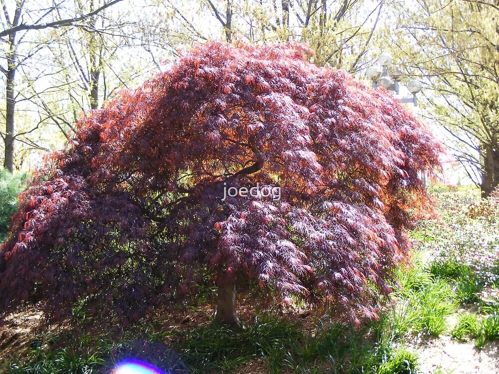 a beautiful tree by joedog