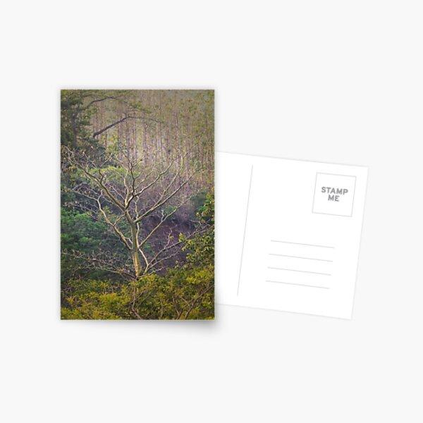 Soul-baring Tree Postcard