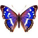 Purple Emperor Butterfly Watercolor Painting Wildlife Artwork by Alison Langridge