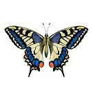 Swallowtail Butterfly Watercolor Painting Wildlife Artwork by Alison Langridge