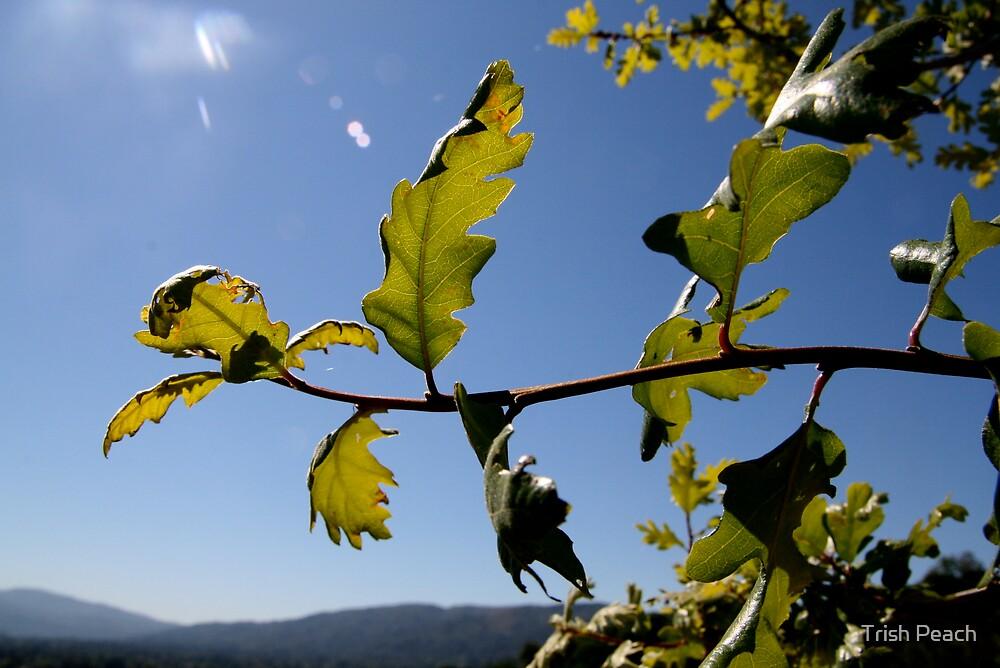 flying oak leaves by Trish Peach