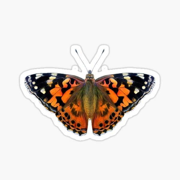 Painted Lady Butterfly Watercolor Painting Wildlife Artwork Sticker