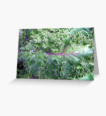 Fresh Kale  Greeting Card