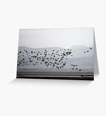 Barnacle geese buzz the Solway mud flats Greeting Card