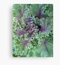 Fresh Red Kale From the Garden Canvas Print