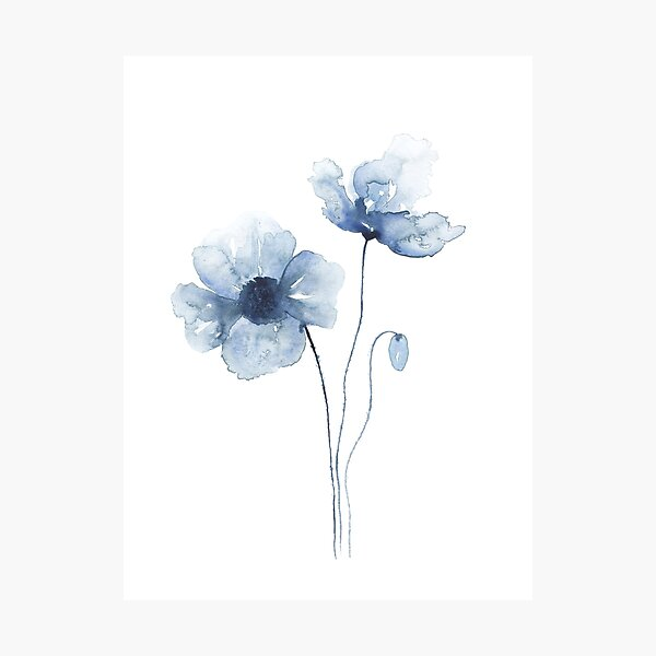 Blue Watercolor Poppies Photographic Print