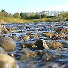 A little stream by Finbarr Reilly