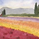 Spring Tulip Fields, WA by Diane Hall