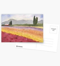 Spring Tulip Fields, WA Postcards
