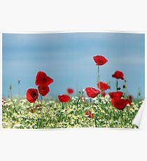 red poppy and chamomile wild flowers Poster