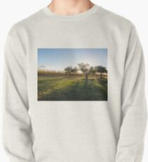 Vines in the afternoon light Pullover