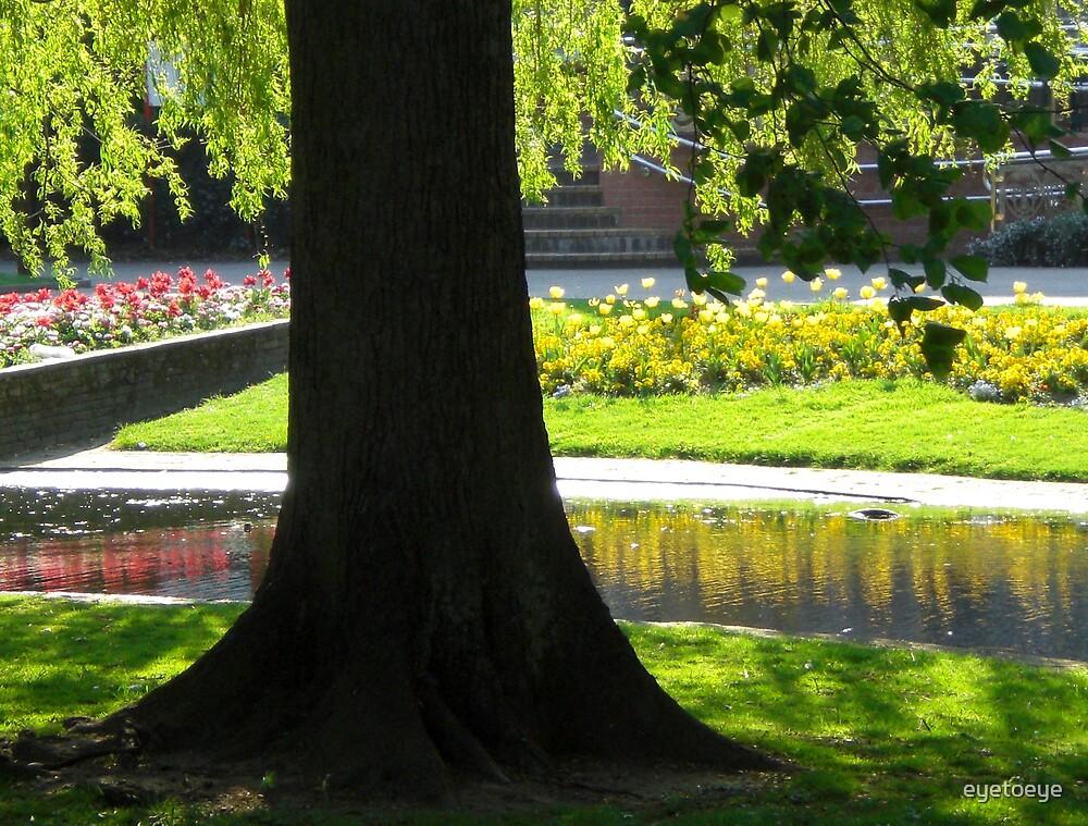 Spring Reflections by eyetoeye